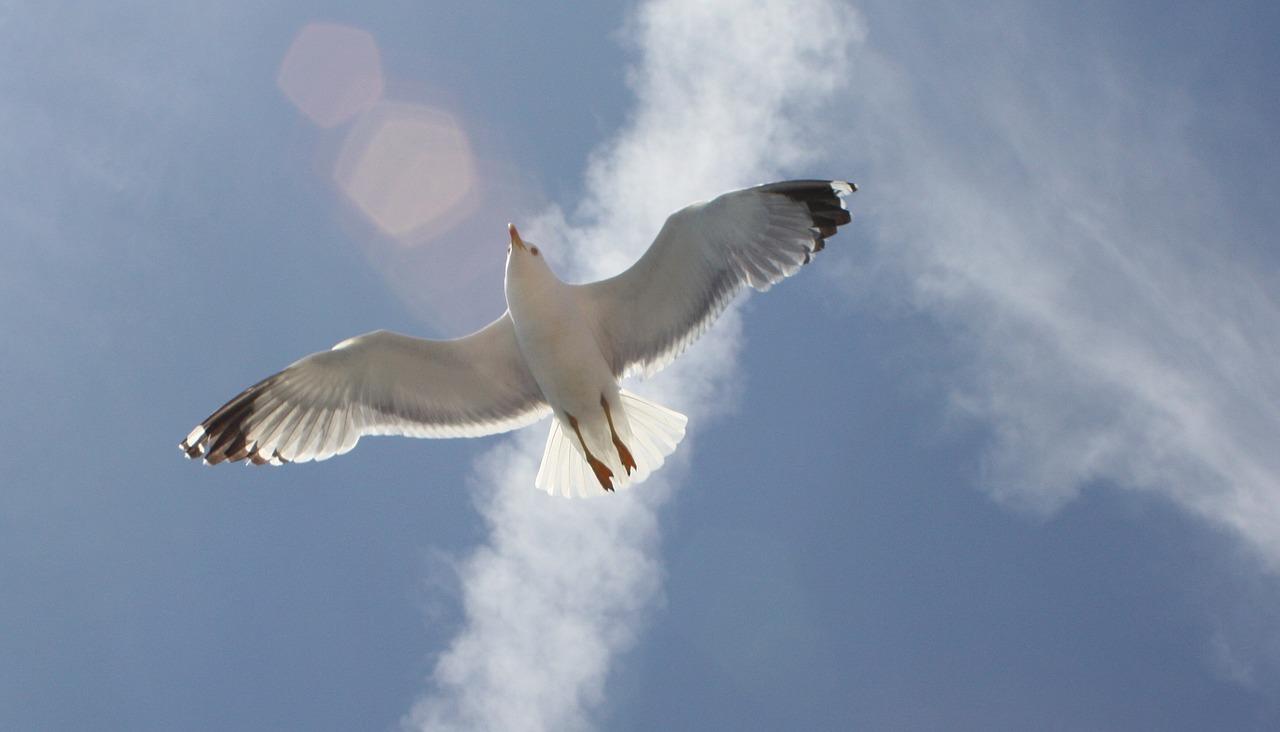 seagull-1566318_1280